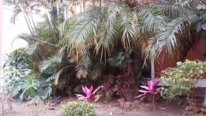 plantas clinica